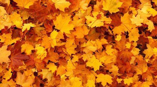 Addio estate: oggi è il giorno dell'equinozio di autunnoHDblog.it
